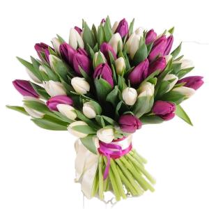 тюльпаны бел филолет